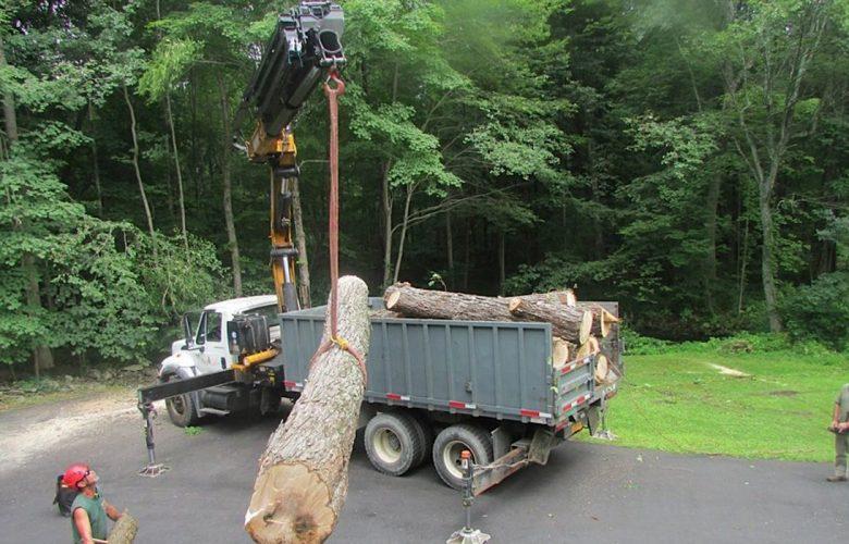 local tree service contractors