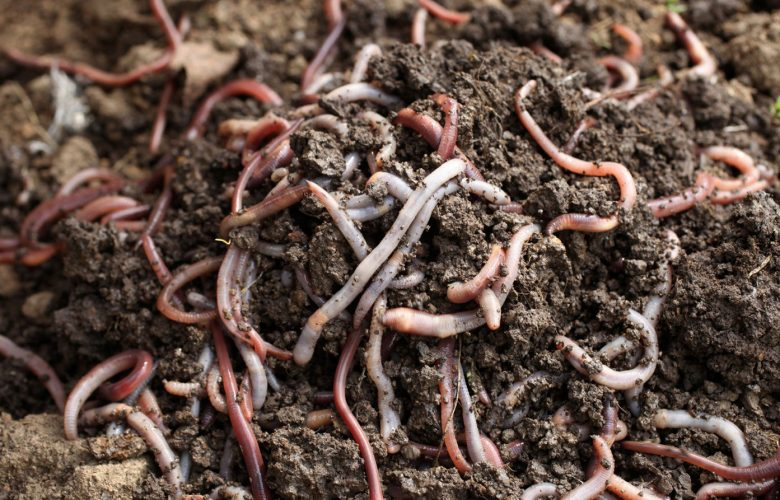 can i use earthworms for composting